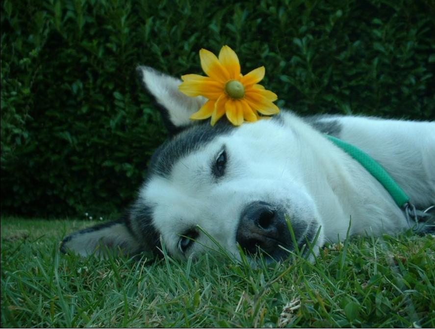 Poème : la prière du chien...